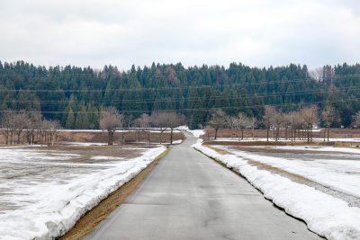 三本桜 真向かいの農道