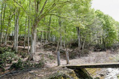 ブナ林-自然観察園入口