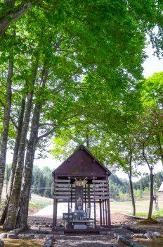 ブナ林-苗場神社